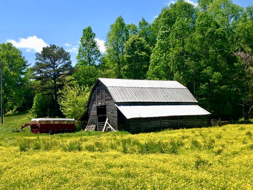 A Barn in a Meadow