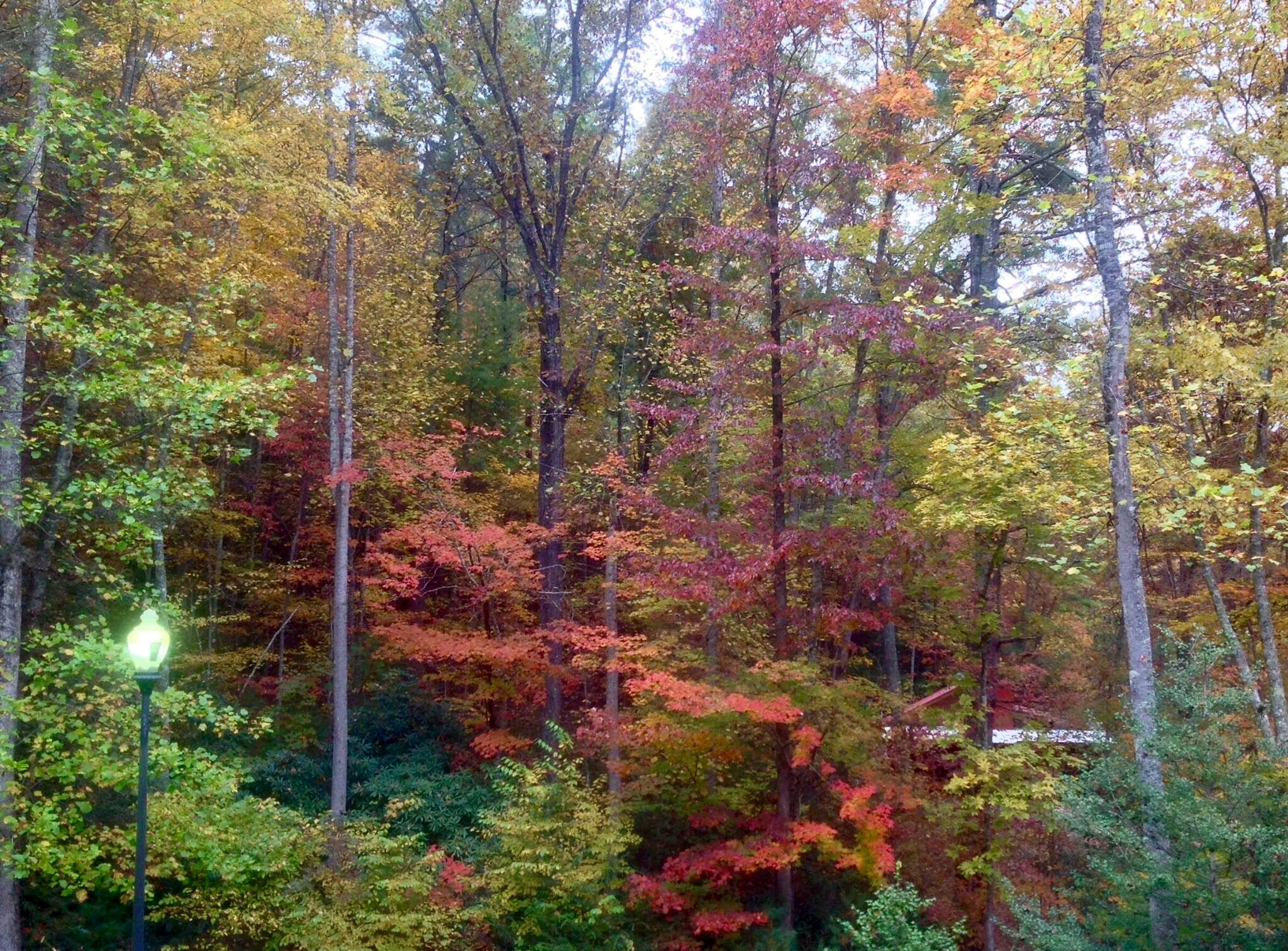 My Front Yard in the Fall